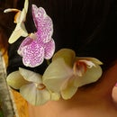 Orchid hairstyle