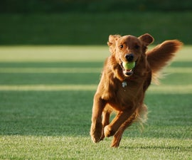 Simple commands to teach your dog