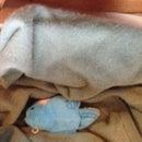 Beginner's Cat Pillow (A Pillow for a Cat, Not of a Cat)