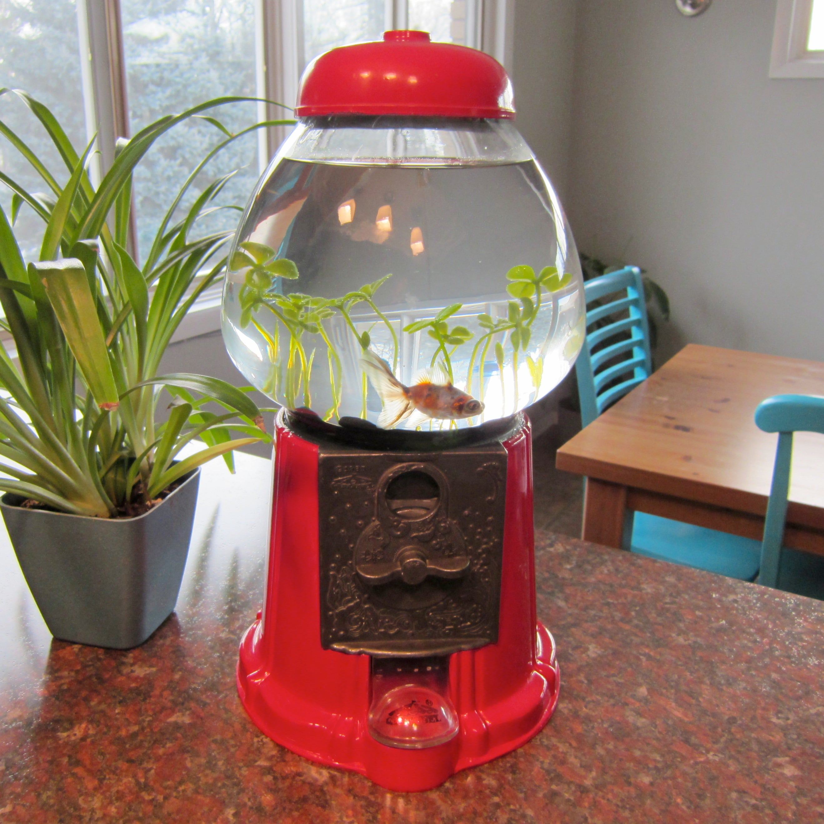 1 Gallon Gumball Style Plastic Cookie Jar Fish Bowl with Lid