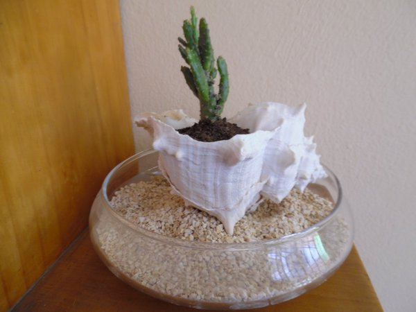 Picture of Seashell Planter