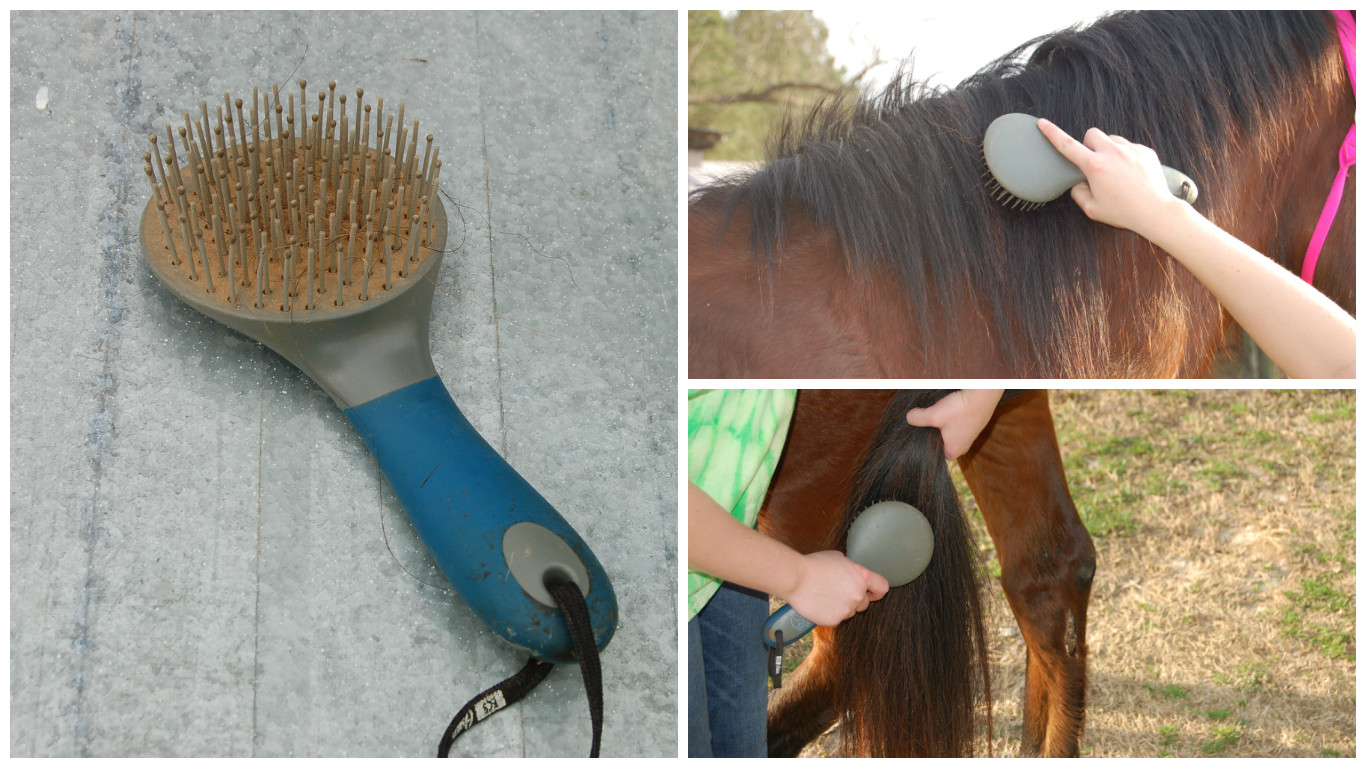 Picture of Use a Wide-tooth Comb or Mane and Tail Brush to Brush Out the Mane and Tail