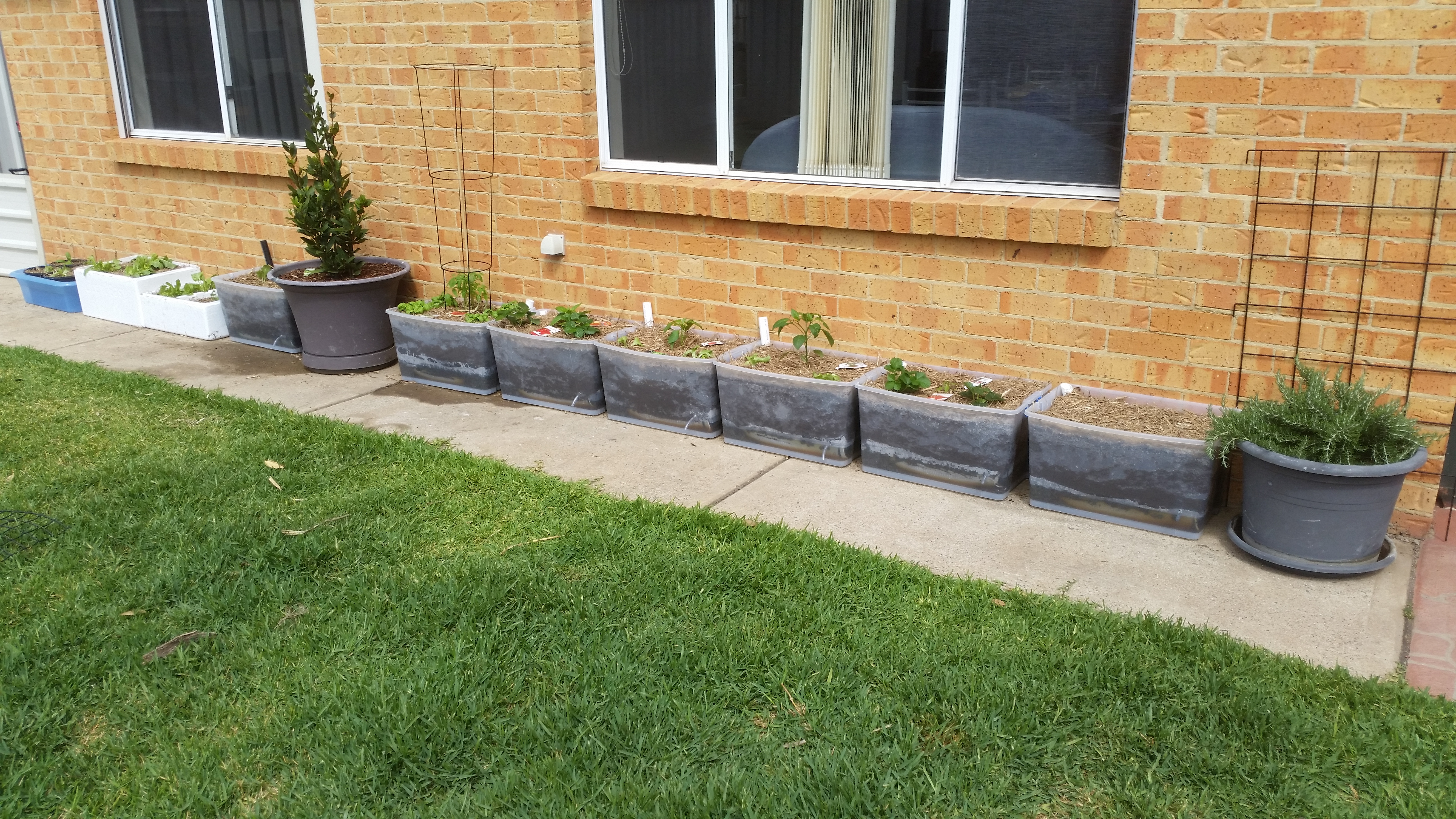 Picture of Cost Effective Plastic-tub Wicking Beds