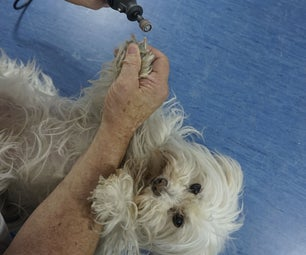 Using a Rotary Tool to Trim a Dogs Nails