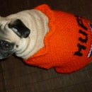 Easiest Custom Knit  Dog Sweater Ever.