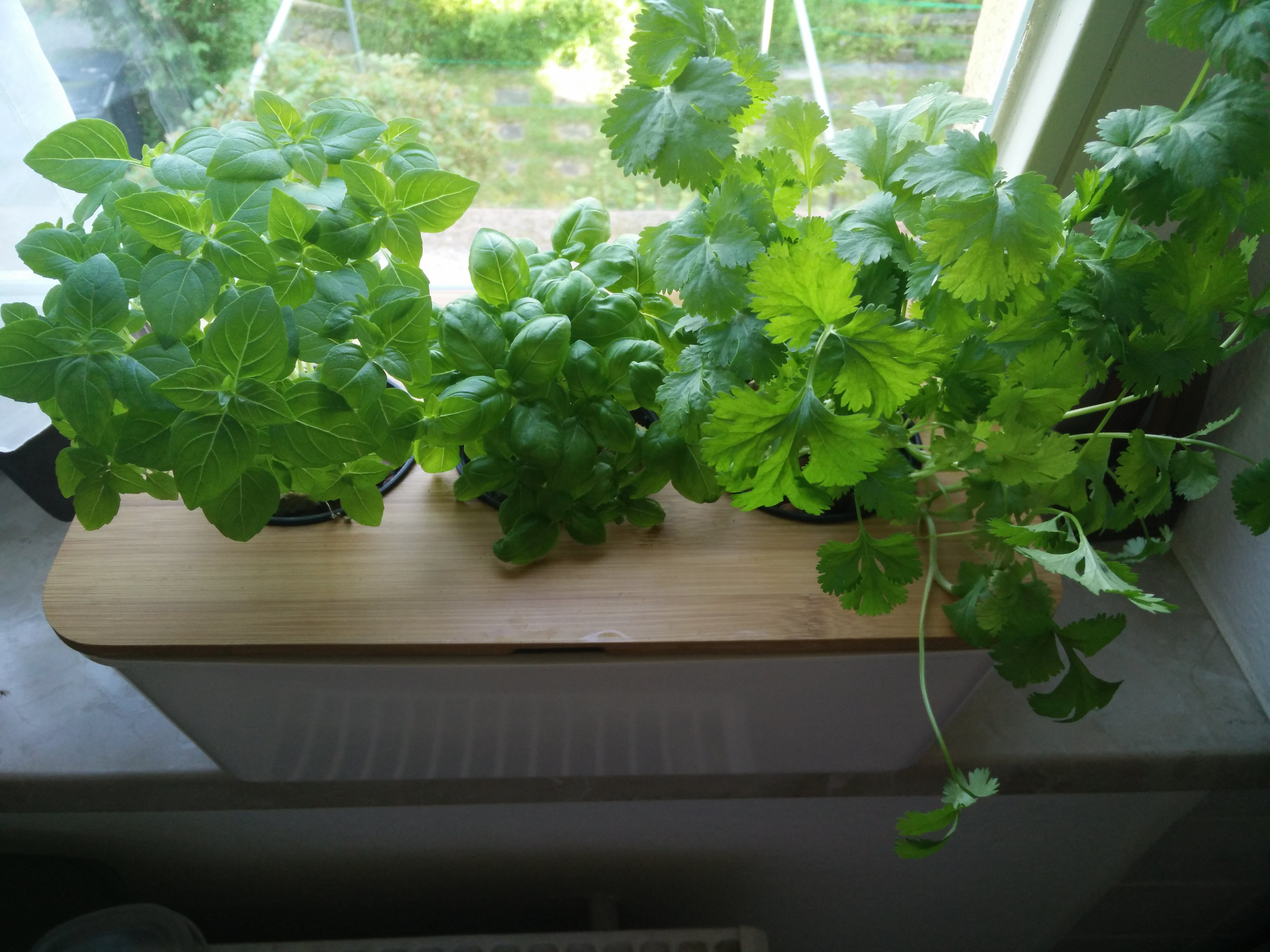 Hydroponics Herb Garden Kitchen Windowsill Hydroponic Herb Garden 5 Steps With Pictures