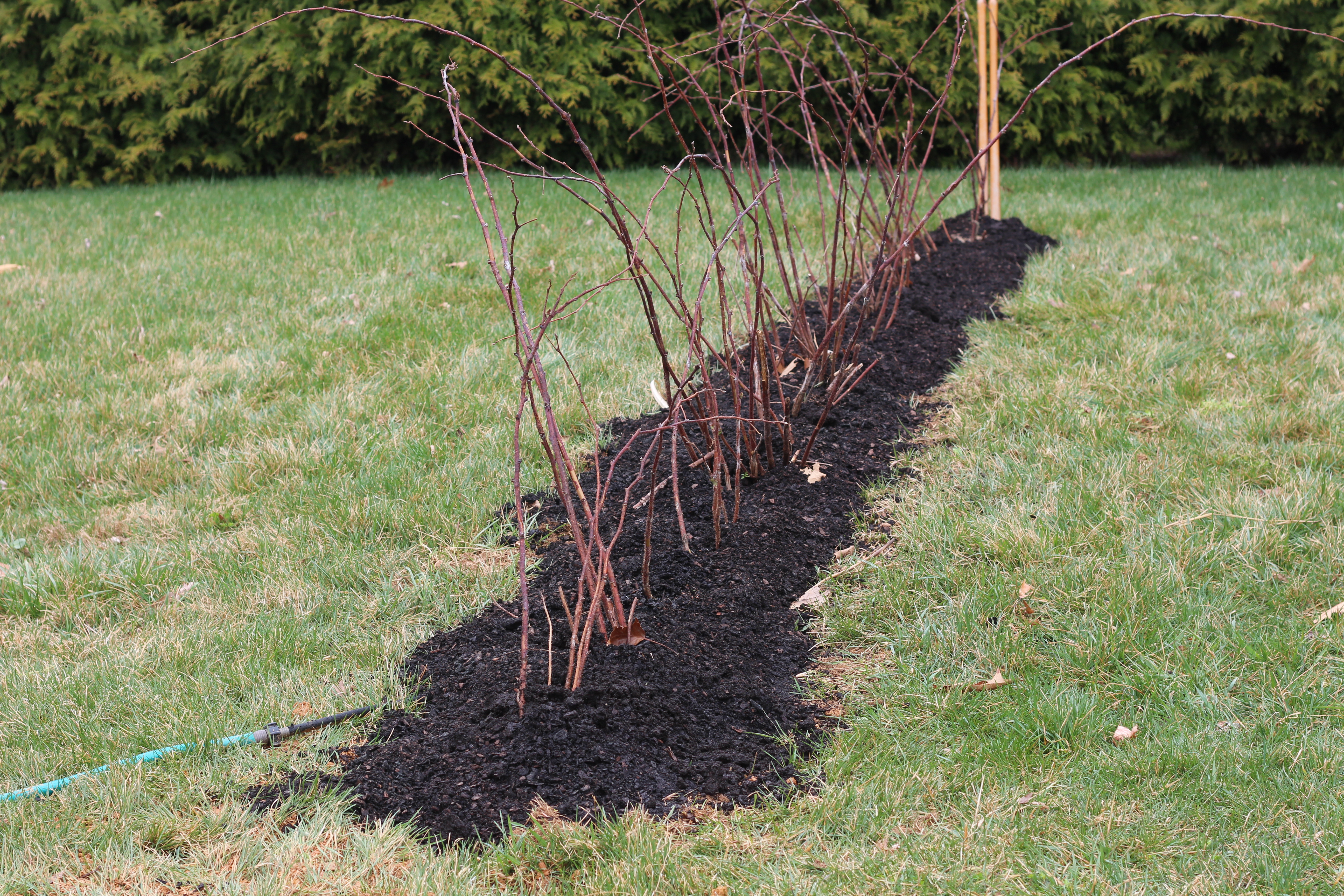 Picture of Mulch