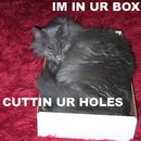 How to make LOLCats, Meme cats, Cat macros, or cat pictures with funny captions