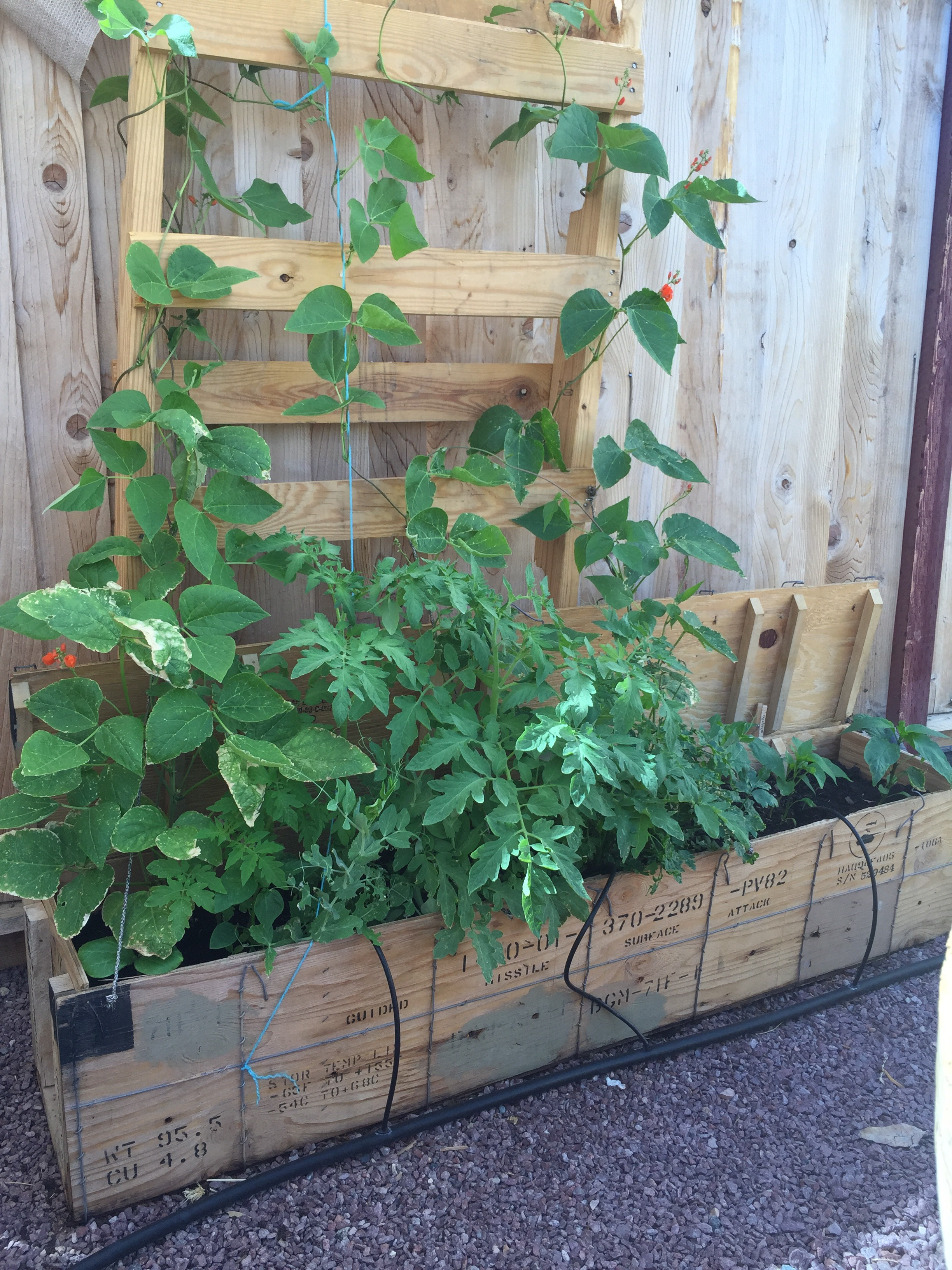 Picture of Ammo Boxes Turned Vegetable Garden