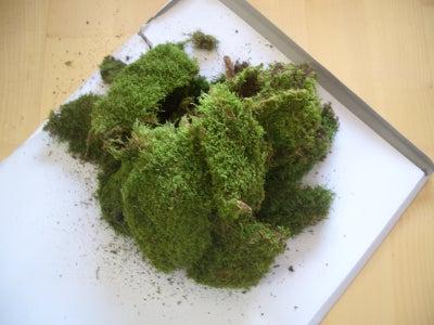 Preparing the Moss
