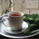 Soursop Leaves Tea!!! Cancer FREEEE!!!