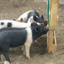 Automatic hog waterer