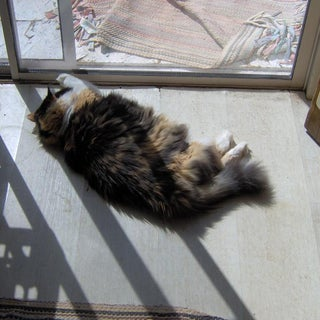 cat-imobilized-by-sunlight.jpg