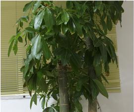 Arduino Smart Home for Environment Tree