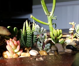 Shelf to Succulent Coffee Table Conversion.