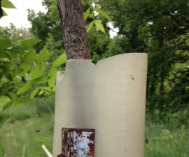 Tree Tube Use and Removal
