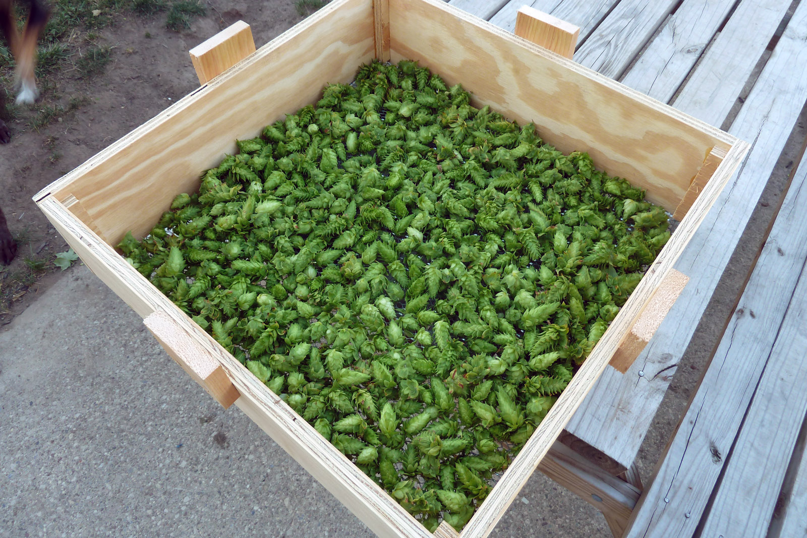 Picture of Oh the Hops!