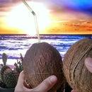 Coconut White Russian - Inside a Coconut!