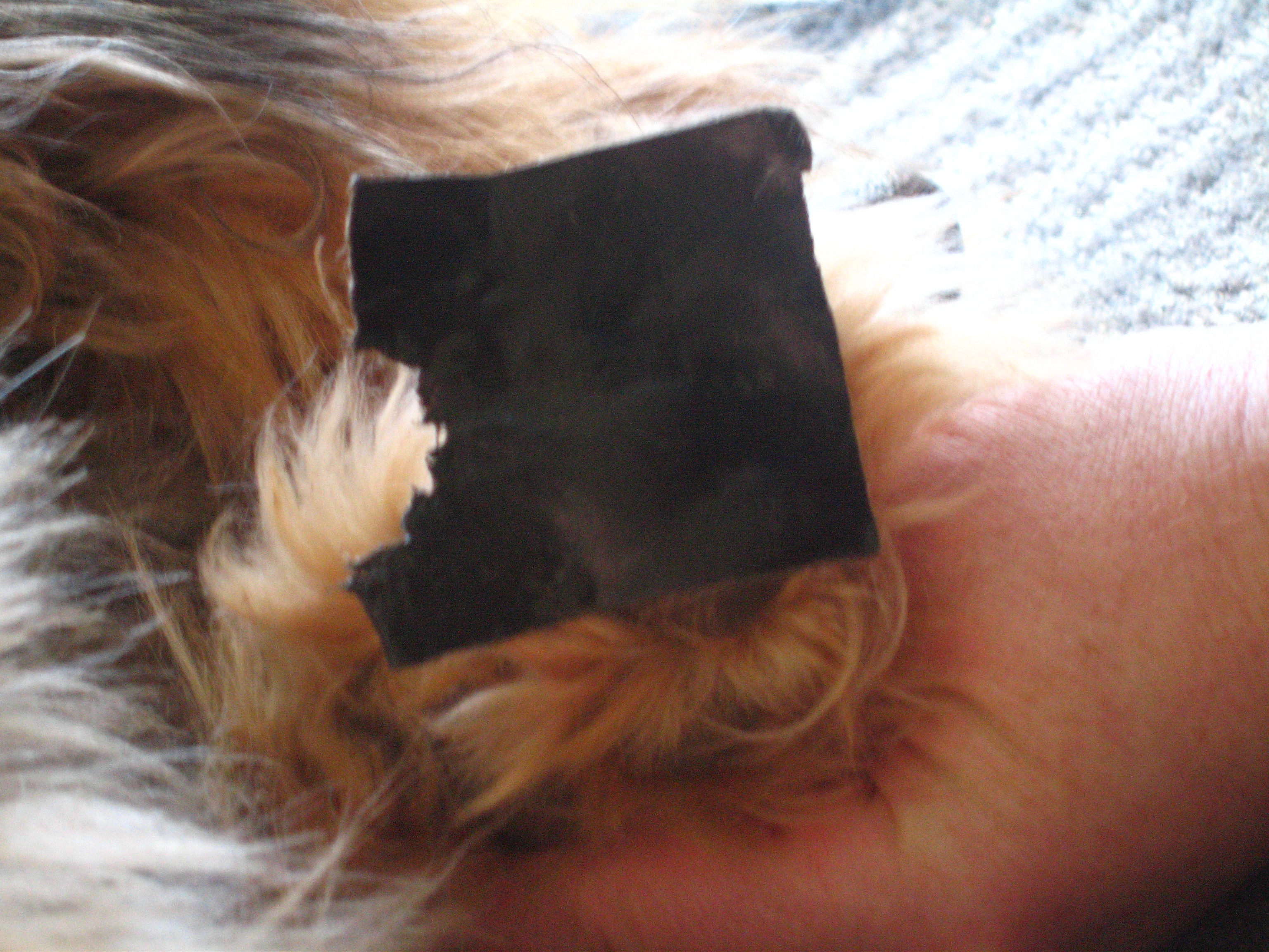 Picture of please help!! my dog stepped on a pice of duct tape and now it is adhered to her paw see message for more info!!