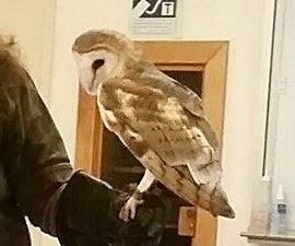 How to Build a Barn Owl Box