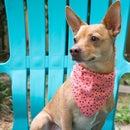 Make a Dog Bandana Collar Slide