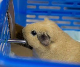 EZ Cardboard Pet Hanging Food Bowl