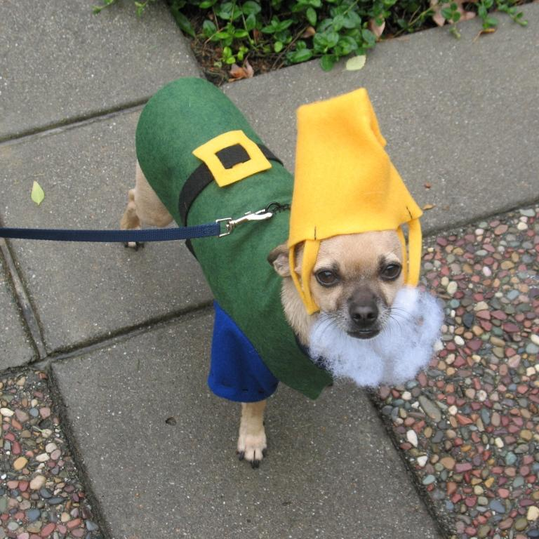 Picture of Puppy Costume