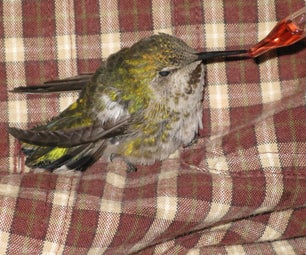 How to Rescue a Hummingbird