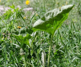 Use straw pellets to keep weeds out of your garden