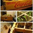 Indoor Garden with Thrifty Supplies