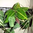 Vertical Garden from Free Recycled Styrofoam