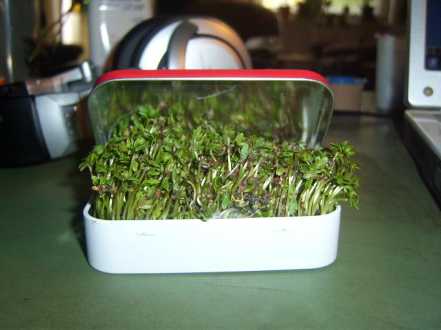 Picture of Altoids Tin Mini Garden