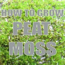 How To Grow: Peat Moss