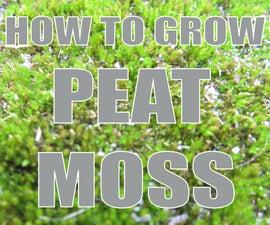 How To Grow: Peat Moss