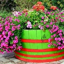 Grow food crops or ornamentals in a barrel