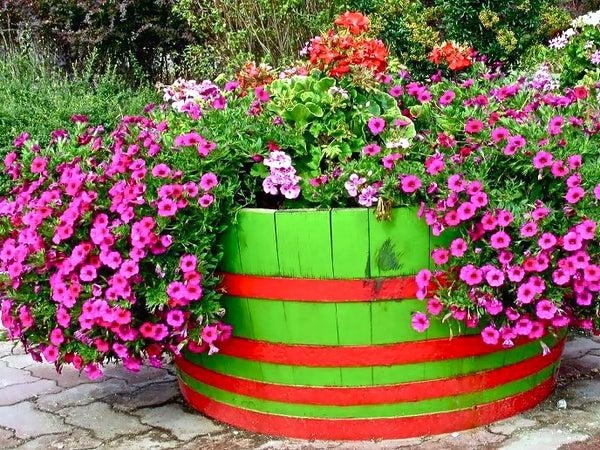 Grow Food Crops or Ornamentals in a Barrel