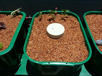 Seedling Planting Aid for Hydroponic Pea Gravel Bed
