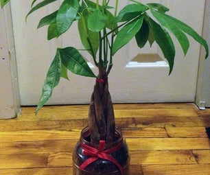 Transplant a House Plant to Larger Pot (without Buying a Thing!)