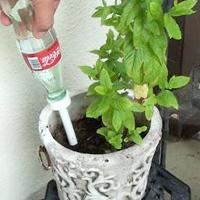 Coke Bottle Plant Feeder
